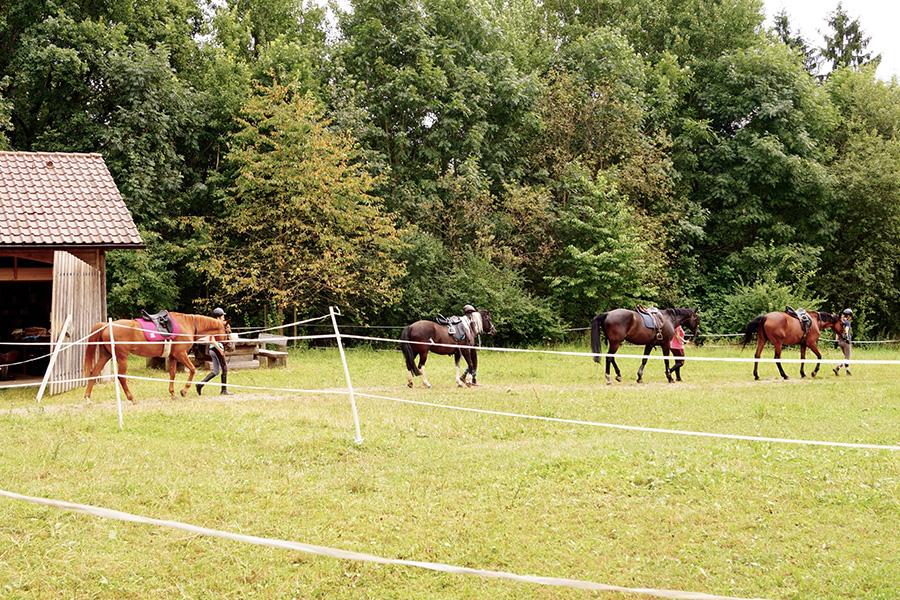 Schmalenberg Pferdefreizeit 1