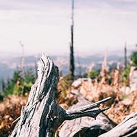 Althütte